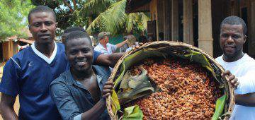 Eat chocolate, save a rainforest - the Gola Cocoa Project tells you how